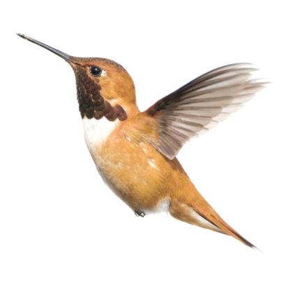 KEK Amsterdam kolibrie
