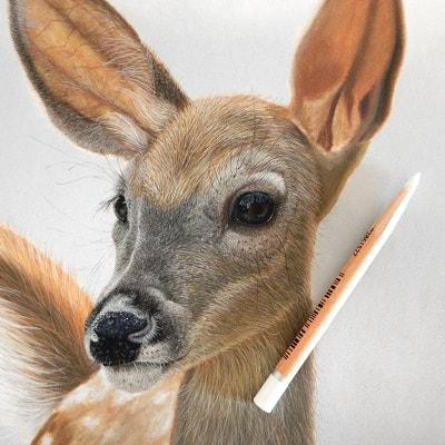 Detail Bambi