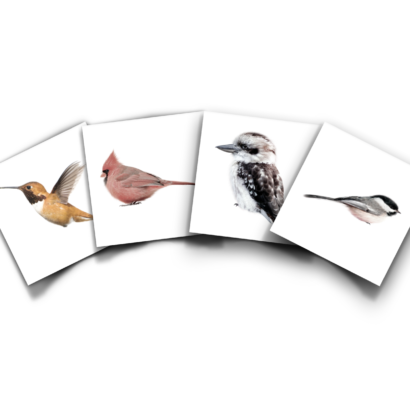 Productbundel KEK Exotisch Vogels