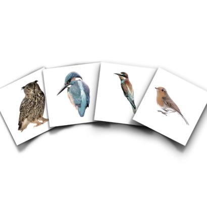 Productbundel KEK Inheemse Vogels