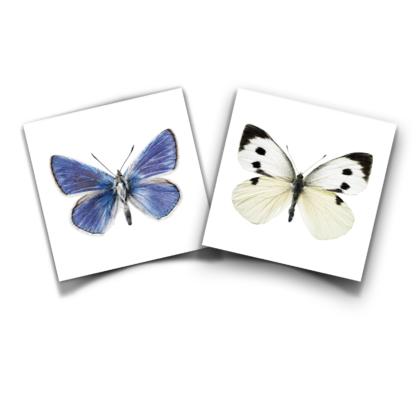 Productbundel KEK Vlinders