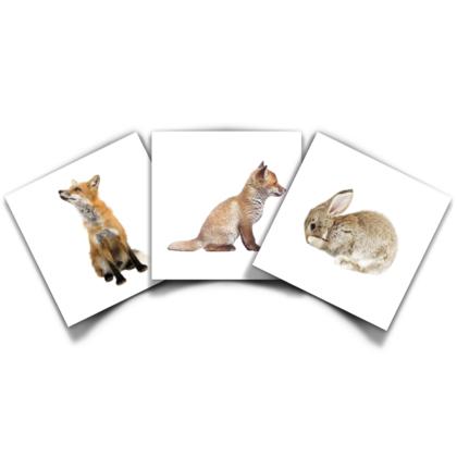 Productbundel KEK Zoogdieren